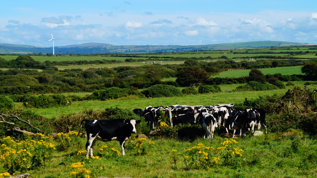 Pembrokeshire is also a bucolic paradise, with acres of rolling green farmland. The fields are full of hay bales and silage right to the cliff edge; agriculture sits side by side with the Celtic Sea.